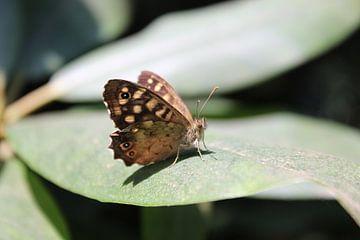 Vlinderpracht van Melissa Blom