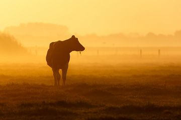 koe in mist van Pim Leijen