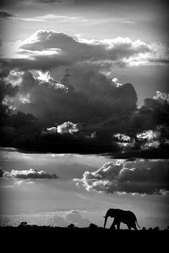 Hij loopt onder een African Sky, WildPhotoArt  van 1x