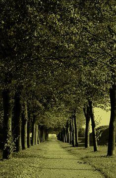 avenue les arbres sur Yvonne Blokland