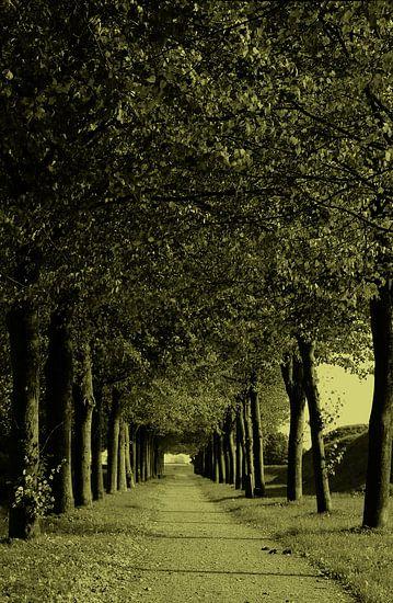 avenue les arbres van Yvonne Blokland