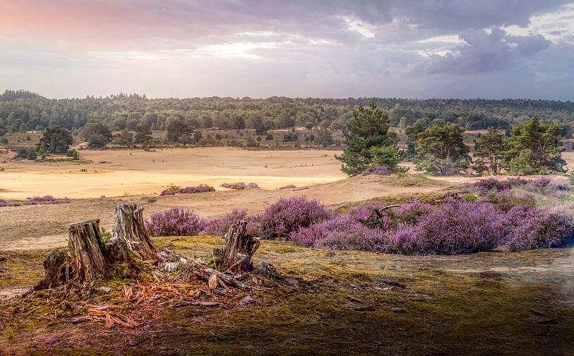 Zandverstuiving Heide Posbank van Peschen Photography