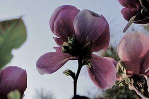 Bloem aan de Tulpenboom 2.1