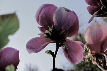 Bloem aan de Tulpenboom 2.1 van Marian Klerx