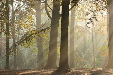 Magic Woodland (1)