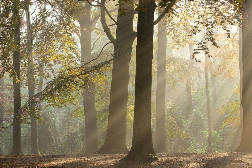 Magic Woodland (1) van Art Wittingen