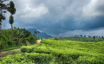 Teeplantage in Pangalengan von Karin vd Waal