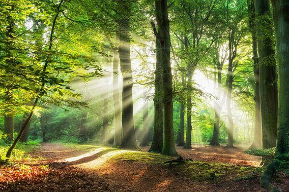 Lighten the Path van Lars van de Goor
