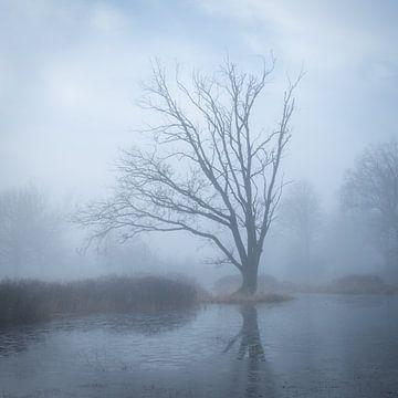 Baum-Reflexion von Jeroen Linnenkamp