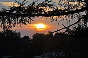 ondergaande zon tussen de boomtakken van