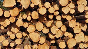 Bomen klaar voor transport van Fields Sweden