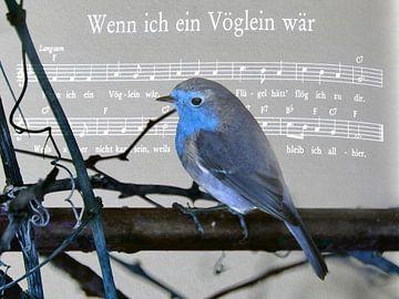 Wenn ich ein Vöglein wär..... von Christine Nöhmeier