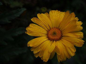 Gele bloem met druppels von Anne de Brouwer