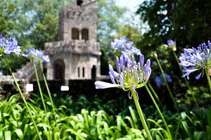 paarse bloem kasteel portugal