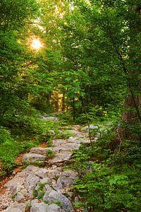De Groene Weg van