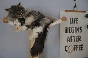 Schlafende Katze auf Kratzbaum van Thomas Wagner