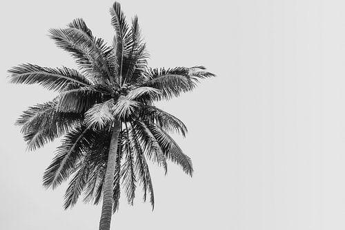 Palmboom op een tropisch eiland | Indonesië