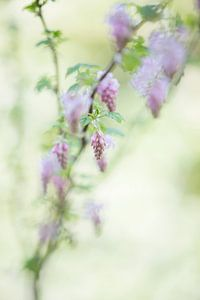 Prachtige bloem van