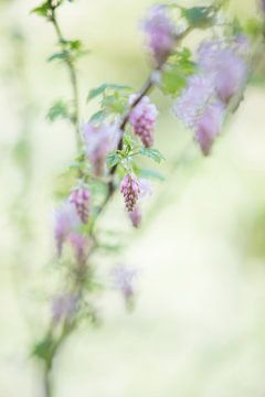 Prachtige bloem van Leora Kalisvaart