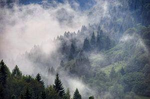 Na de regen, Slowakije. van