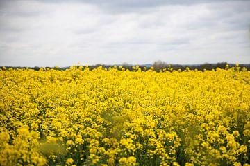 De gele koolzaadvelden van Frankrijk von Petra Brouwer