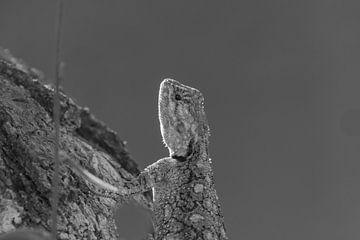 Echse schwarz-weiß von Marijke Arends-Meiring