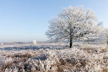 Winter op de Ginkelse Heide. Rijp aan de bomen en heide. von Rijk van de Kaa