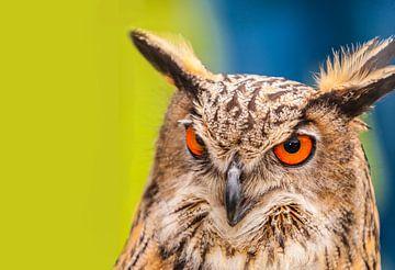 UIL .Owl van Brian Morgan