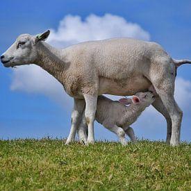 Moeder en Kind van Nico Dam