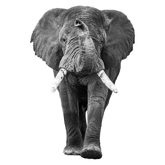 De lopende olifant met slurf omhoog