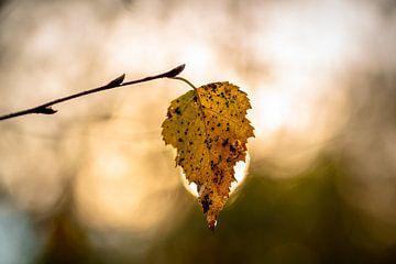 Herfstblad in tegenlicht van