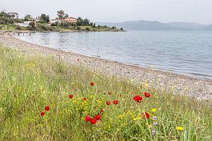 Klaprozen aan het strand op Lesbos, Griekenland van