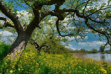 Die ersten Sonnenstrahlen in der Blüte von Tina Linssen