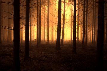 Dark Forest von Nils Dekker