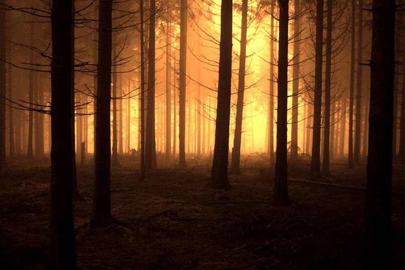 Dark Forest van Nils Dekker