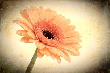Vintage Blume von eric van der eijk