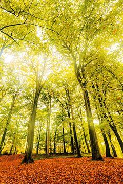 Herfst - Autumn Falls von Cho Tang