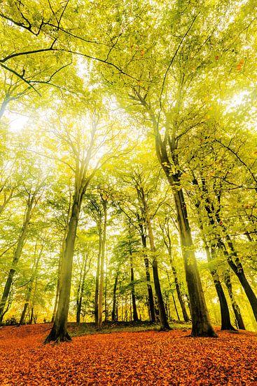 Herfst - Autumn Falls van Cho Tang