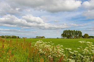 Nederlands lente landschap