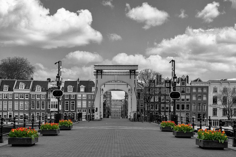 Tulpen bij de Magere brug in Amsterdam van Foto Amsterdam/ Peter Bartelings