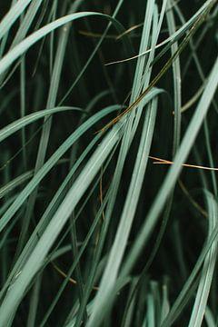 Groene bladeren plant van Lisanne Koopmans