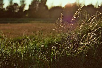 Zonsondergang in het veld van Milan Flik