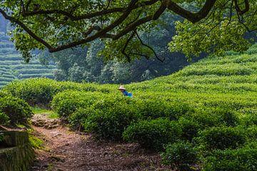 Chinesische Teeplantage von Peter Leenen