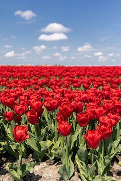 Rotes Tulpenfeld von Dana Schoenmaker
