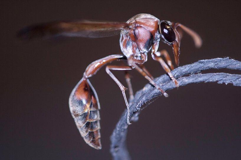 Big Bad Bug van BL Photography