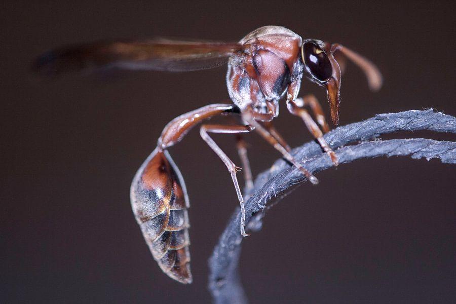 Big Bad Bug