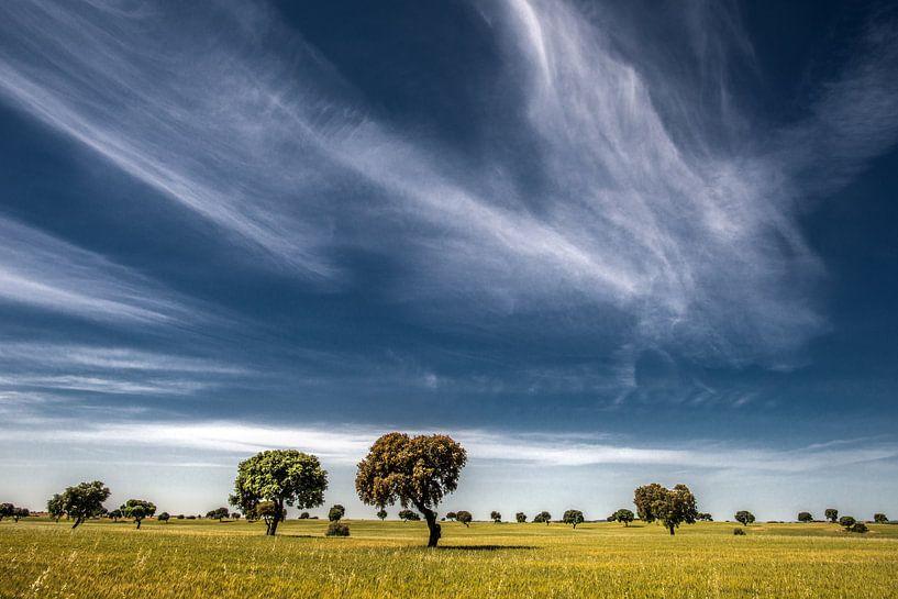 Boom landschap van Harrie Muis