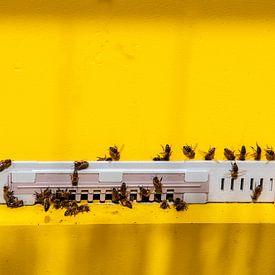 Een zwerm werkende honing bijen in een goudgeel insectenhuis van JM de Jong-Jansen