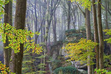 Herbstfarben im nebligen Wald von Cor de Hamer