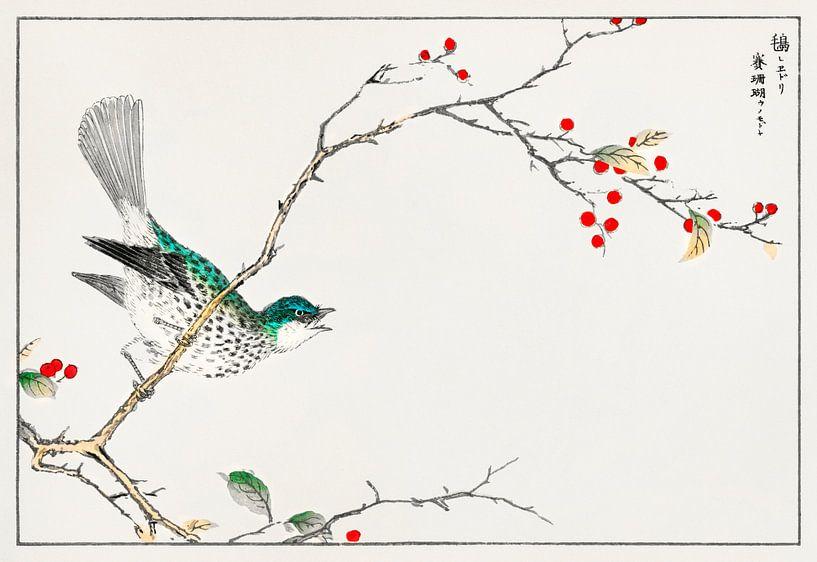 Japanischer Vogel mit Stechpalmenzweig by Numata Kashu von Studio POPPY